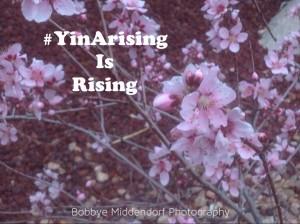 YinArising5-14